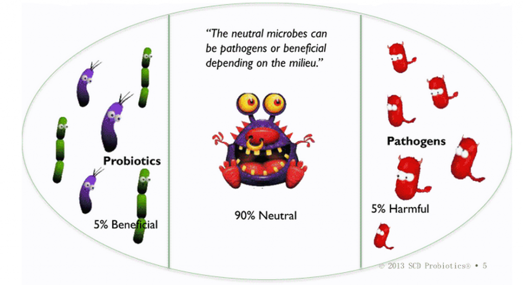 bacteria good or bad Bacteria form the most abundant domain of the prokaryotic kingdom and are  among the earliest forms of life on earth notwithstanding their small size and.