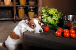 food-toxic-to-dogs