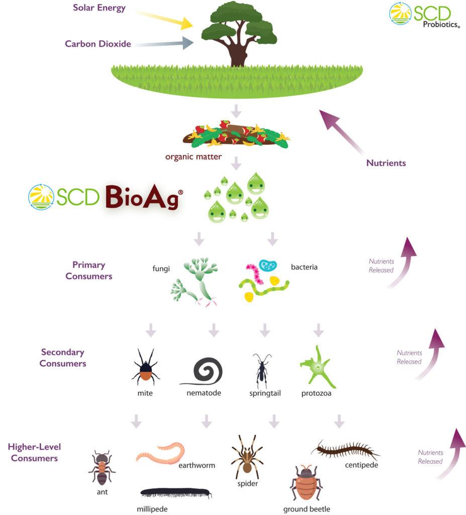 The Soil Food Web - Essential ProbioticsEssential Probiotics
